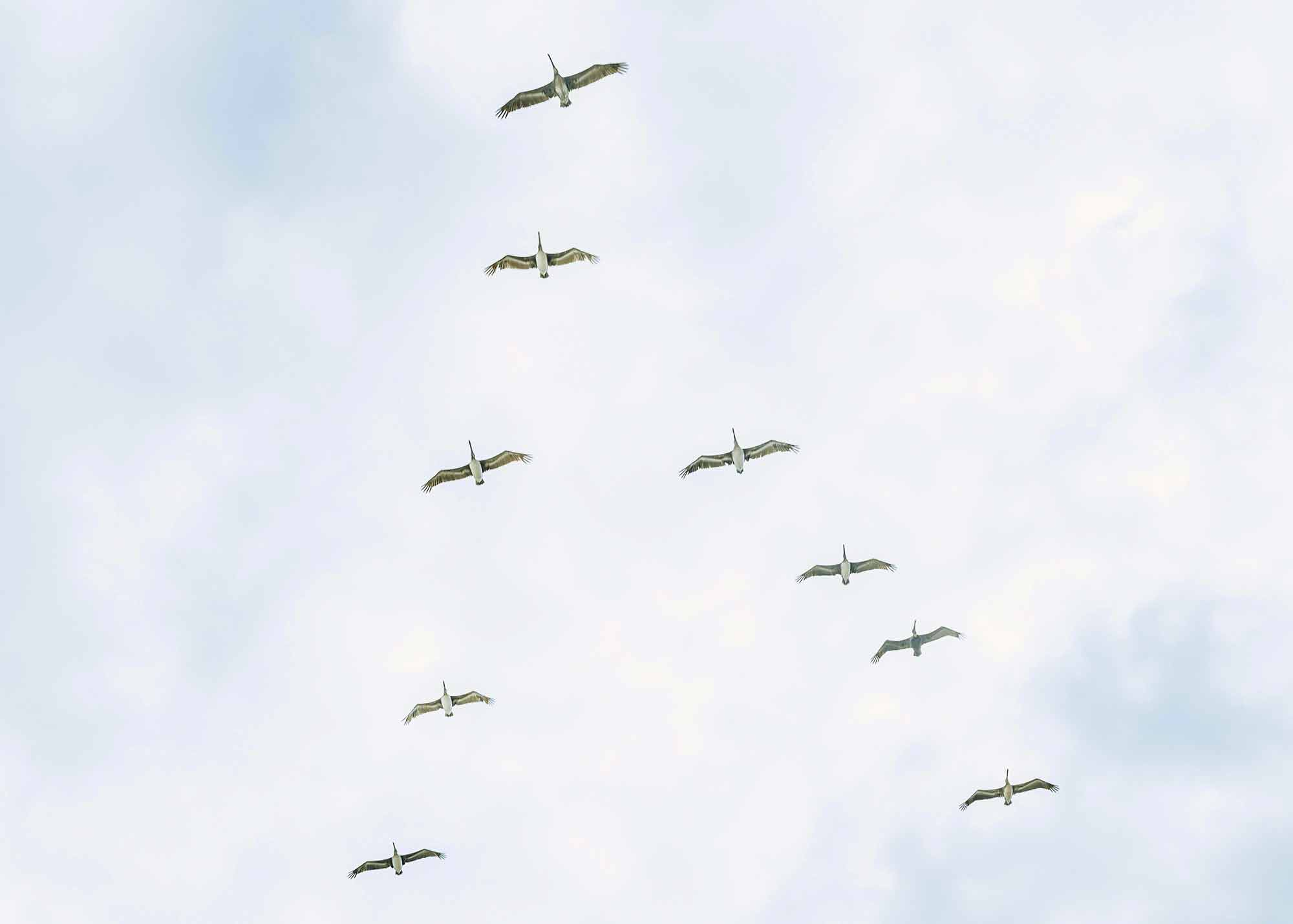 group-of-birds